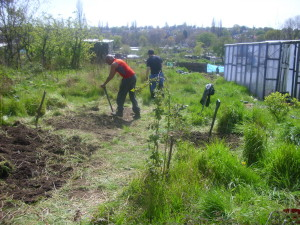Plot holders working on the community orchard
