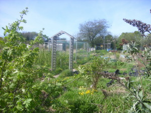 Midland Heart allotment